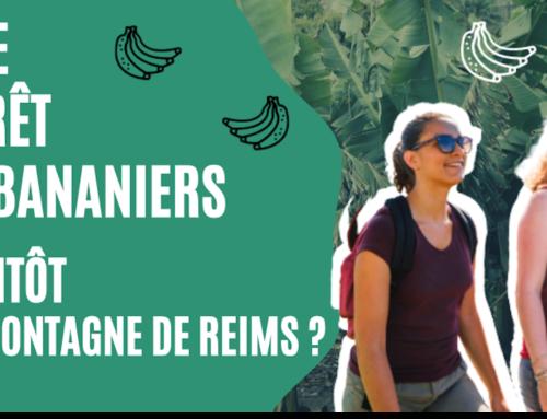 Bientôt une forêt de bananiers en Montagne de Reims ?